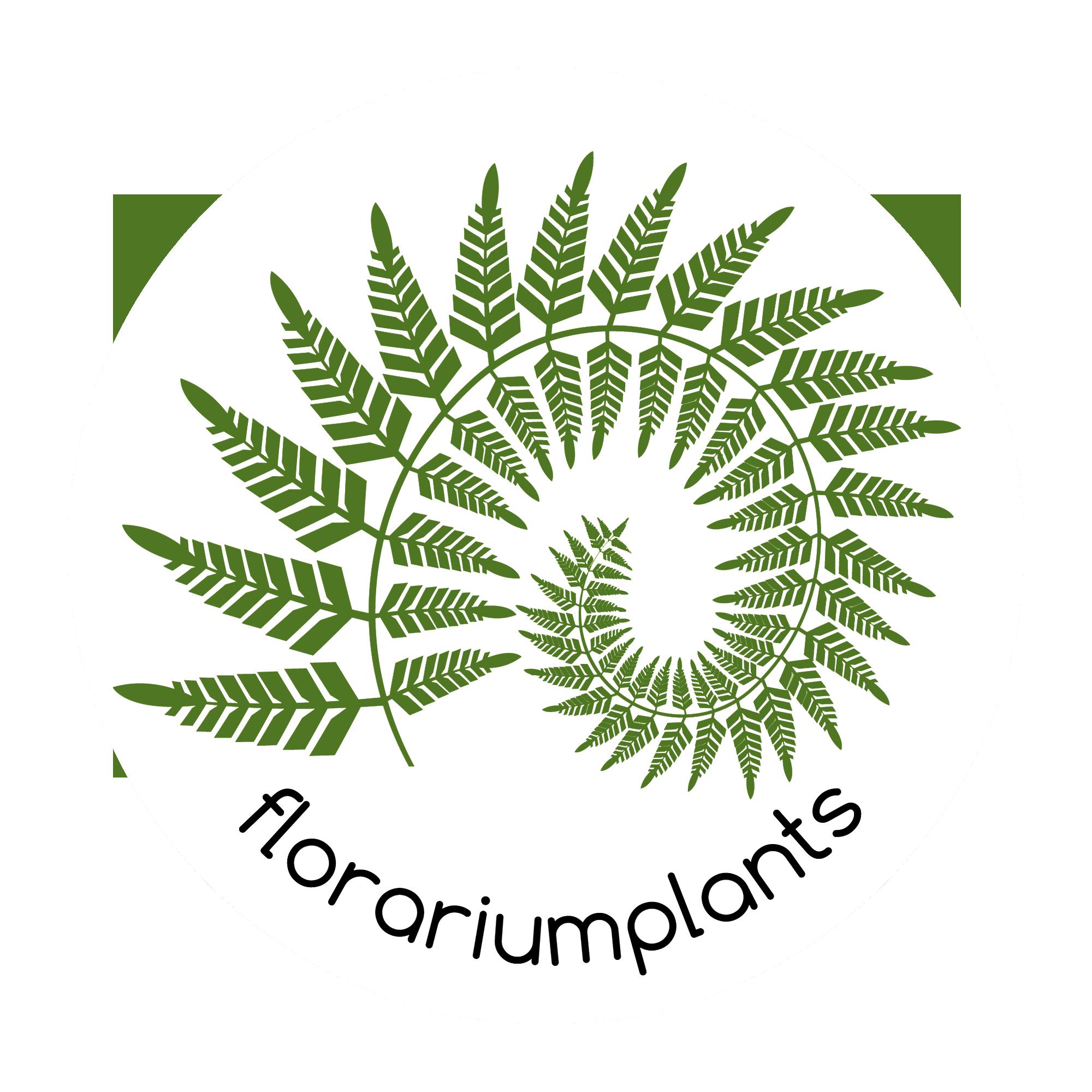Florariumplants-все для создания тропического террариума и готовые композиции