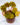 Begonia bowarea Tiger
