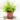 nephrolepis exaltata green fantsy
