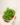 Myriophyllum-matogrossense