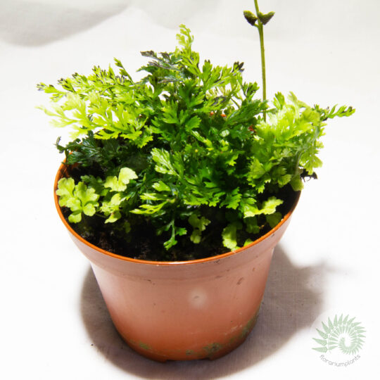 Растения для мастер-классов