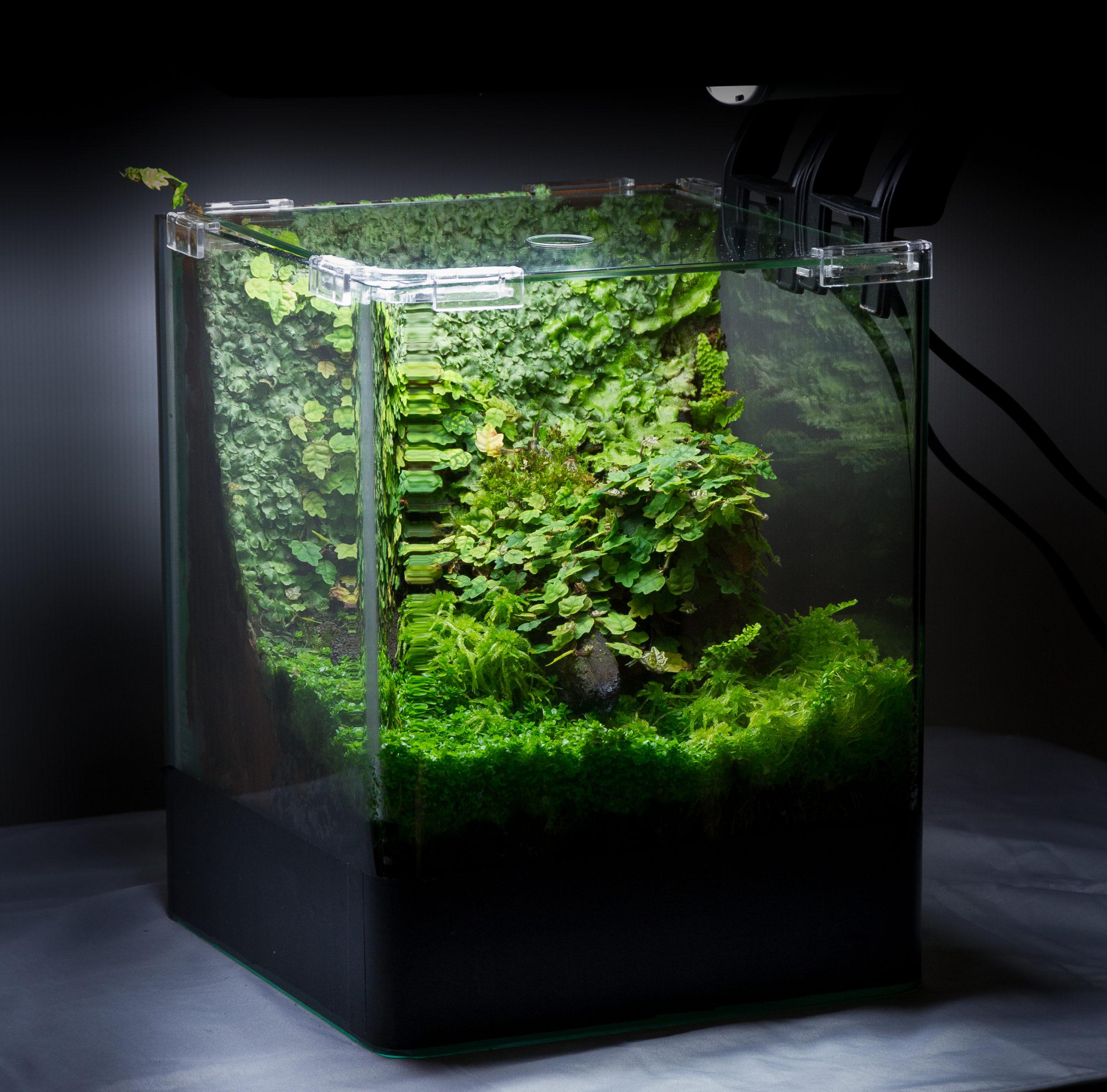 florarium-terrarium-04