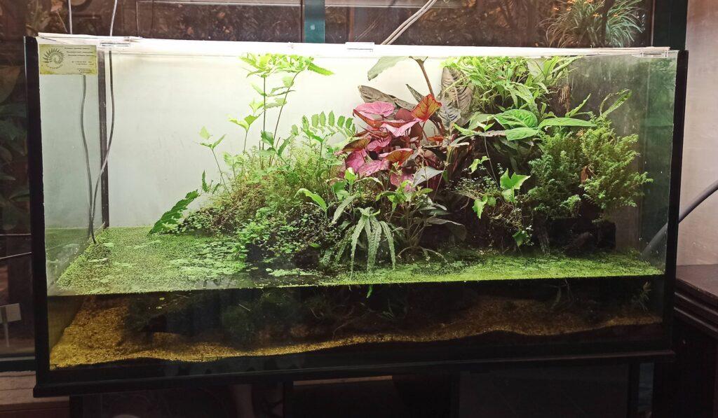 paludarium-florariumplants