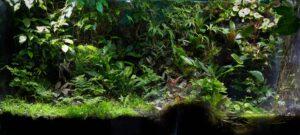 С чего все начиналось. Наши первые флорариумы./florariumplants.com