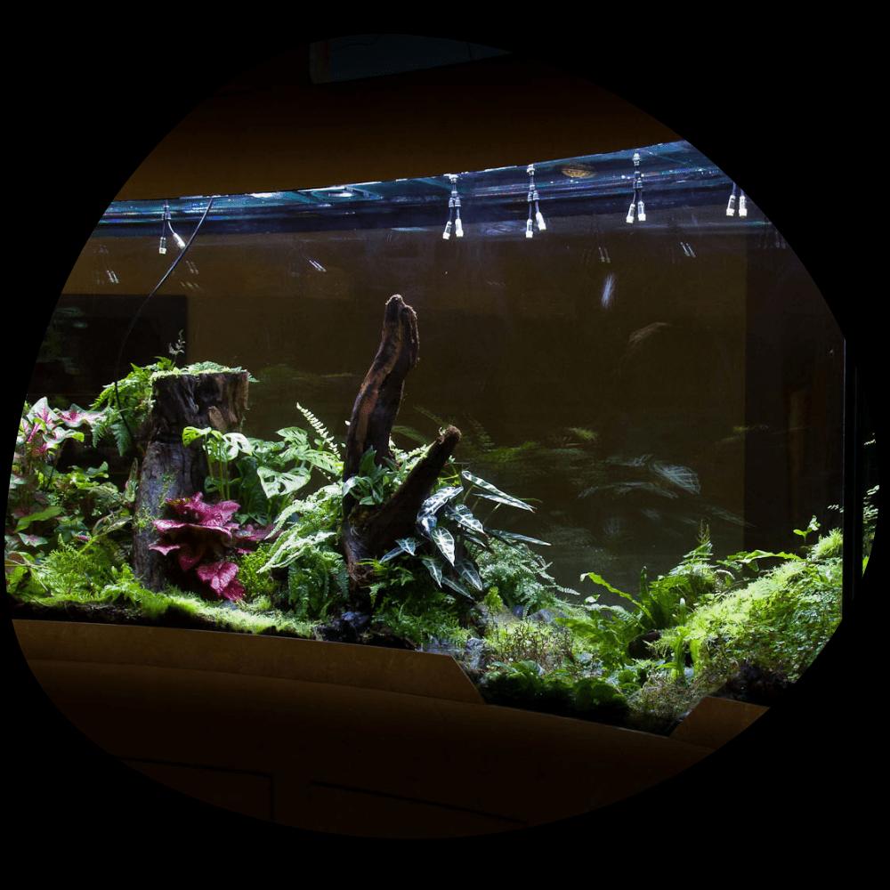 Текущее состояние растений и животных