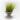 Tillandsia Tenuifolia var. Minima Pulk
