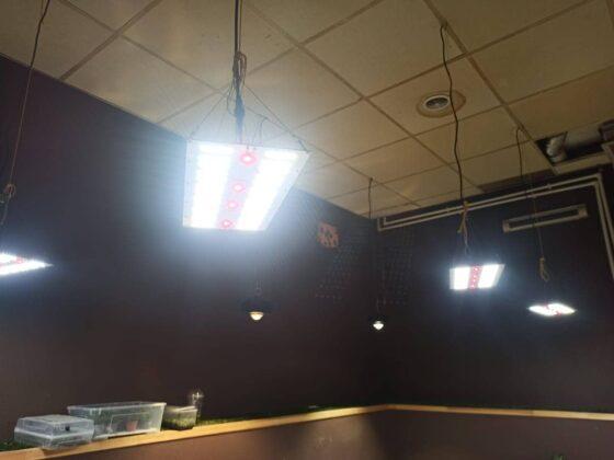 svetilnik quantum board 60 wt-01